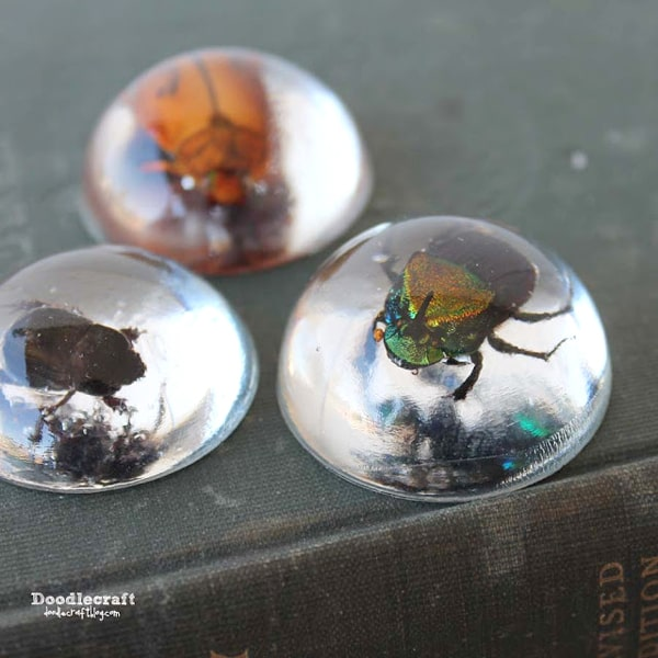 Cast Beetles in clear EasyCast Resin great for paperweights, jewelry or specimen art