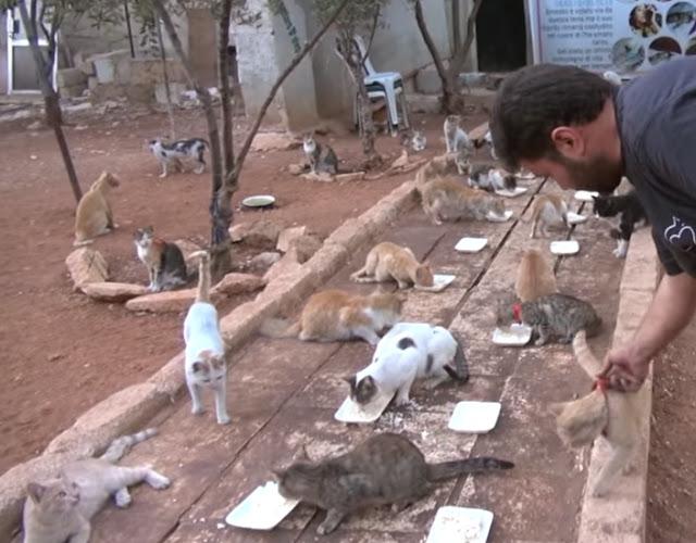Люди уезжали из Алепо, спасаясь от войны, – а этот человек остался там спасая кошек!