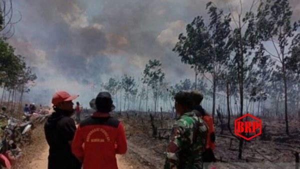 Puluhan Hektare Kebun Karet PT Inhutani II di Kotabaru Terbakar