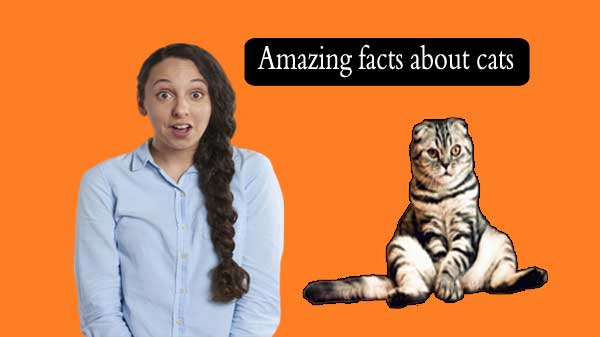 Amazing facts about cats are unknown to many