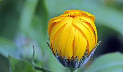 nice-yellow-flower-image