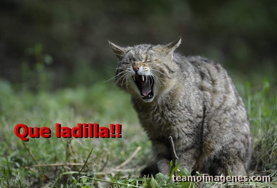 Las mejor imagen de gatos lindos con frases de deja el fastidio para enviar a tu amigo, teamoimagenes.com