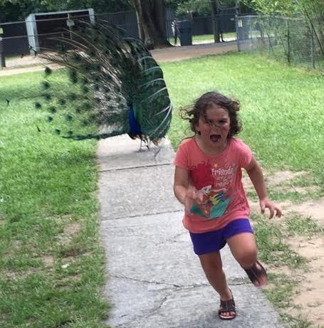 Menina correndo de um pavão