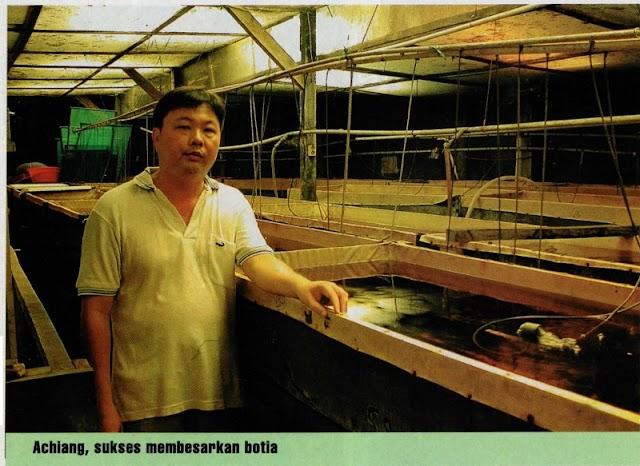 Prospek Bisnis Menguntungkan Eksport Ikan Hias