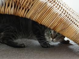 is my cat sick