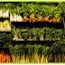 A importância das fibras para a microbiota intestinal