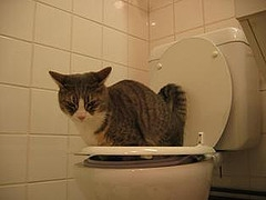 How To Potty Train Your Cat Pets Cute And Docile