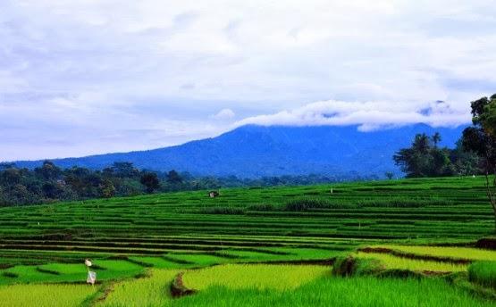 Pemandangan Alam: Foto Pemandangan Sawah dan Pegunungan
