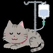 点滴を受ける猫のイラスト