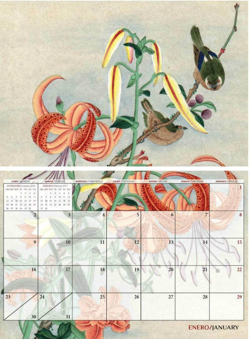 lilium calendario Real Jardin Botánico