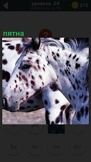 Несколько лошадей с пятнами по всему телу коричневого цвета