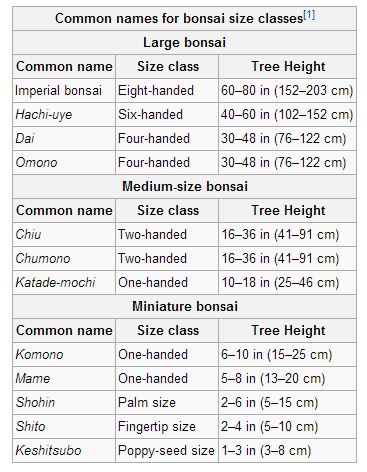 Bonsai Sizes can vary - Bonsai sizes explained for beginners and pros