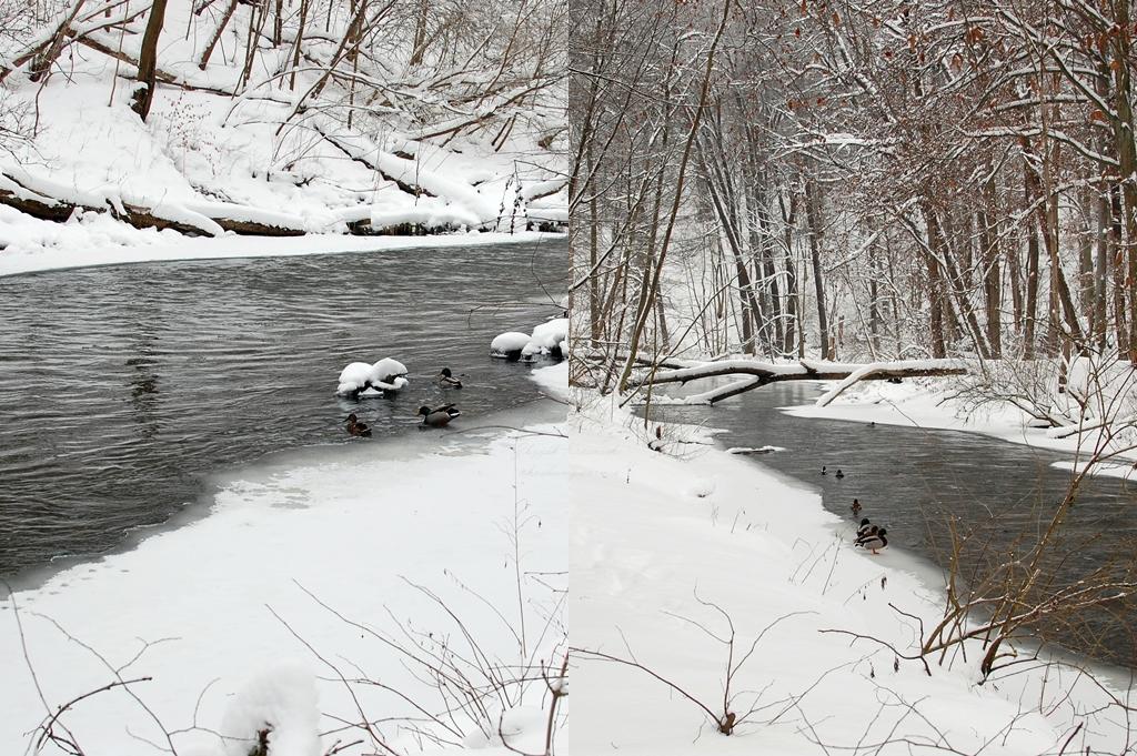Olsztyn | Las Miejski i rzeka Łyna