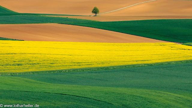 Feld in Deutschland