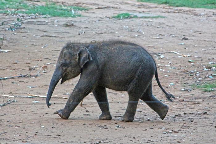 Elefantenbaby im ETH