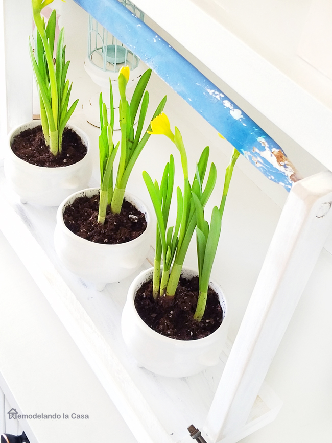 soup bowls repurposed as planters holding yellow tulips -