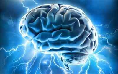 25+ Interesting Human Brain Facts And Brain Anatomy