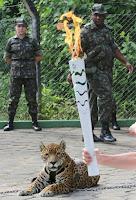 Onça é morta em Manaus após cerimônia da Tocha Olímpica