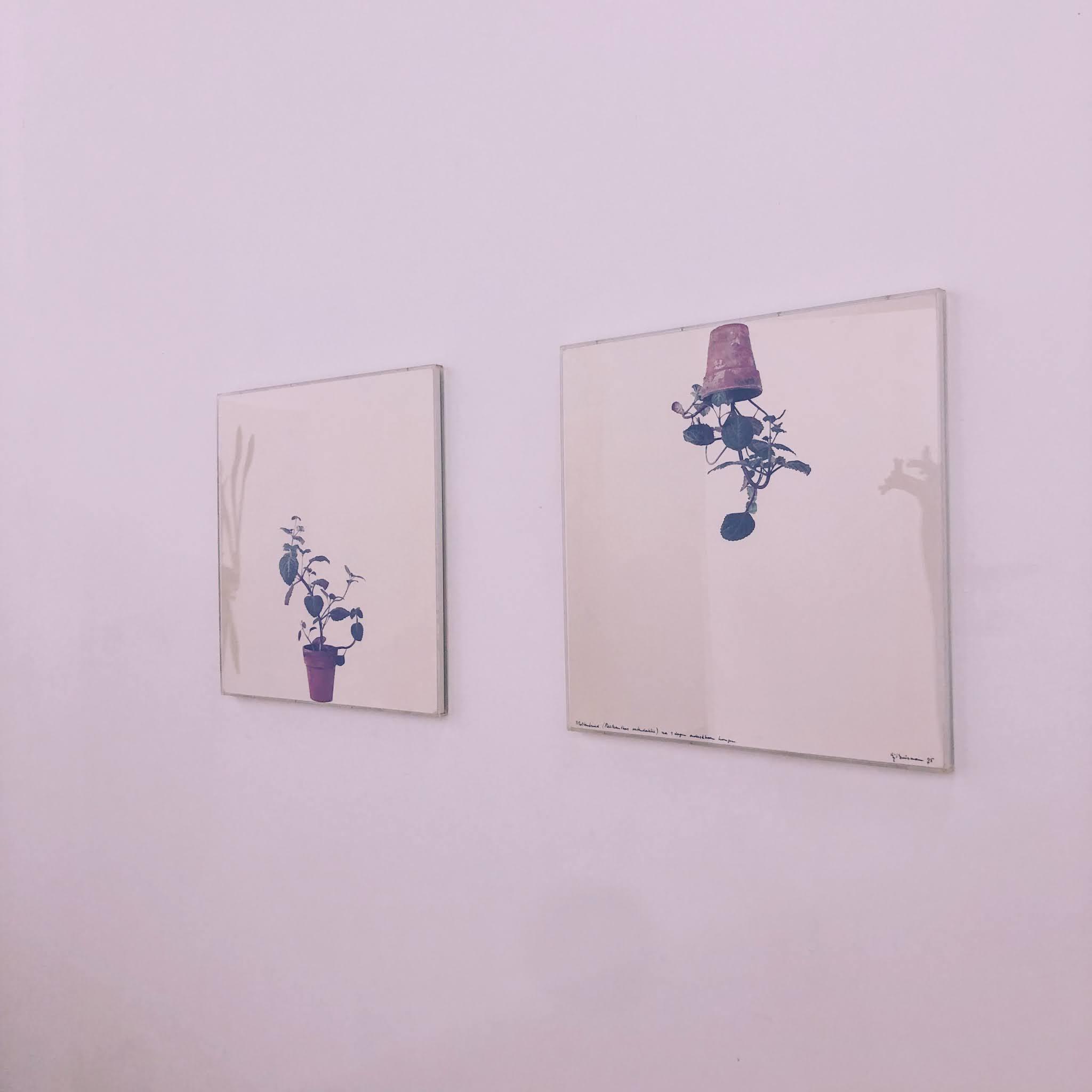 witte canvasen met plantjes op tegen een witte muur