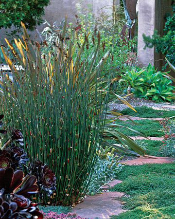 Modern Garden Design Using Ornamantal Grasses Sage Outdoor Designs