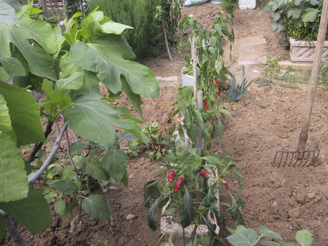If you prepare well your garden before planting you will enjoy after strong and healthy plants!