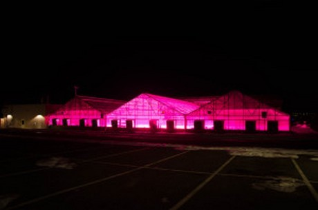 Fresh Hops In LED-Lit Greenhouses Are Making Beer