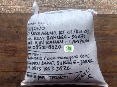 Benih padi yang dibeli   SUYONO Way Kanan, Lampung.  (Setelah packing karung ).