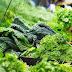 Το αντικαρκινικό βότανο που κάνει… θαύματα
