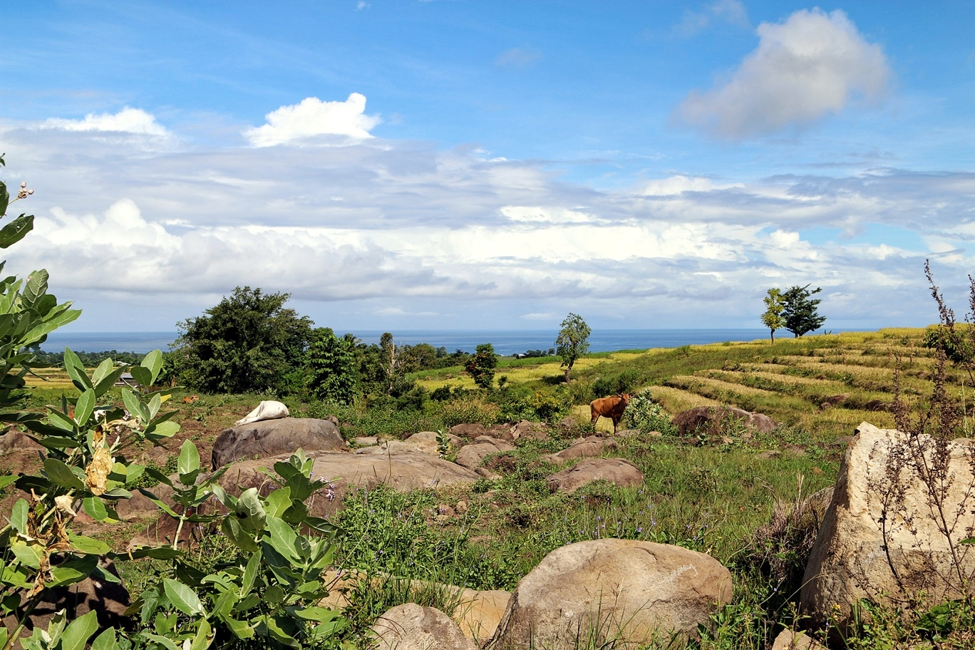 Pemandangan tipikal daerah Timur Indonesia
