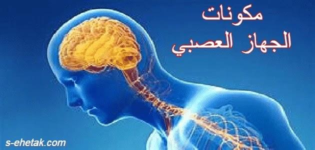 مكونات الجهاز العصبي