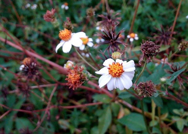 Bunga Cantik, Unik, Menarik & Menawan