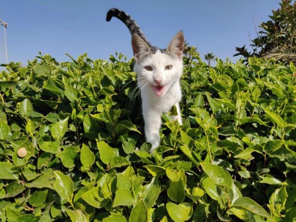 cats agadir