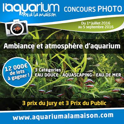 http://www.aquariumalamaison.com/