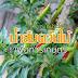 การใช้ประโยชน์จากน้ำส้มควันไม้ ในการเกษตร