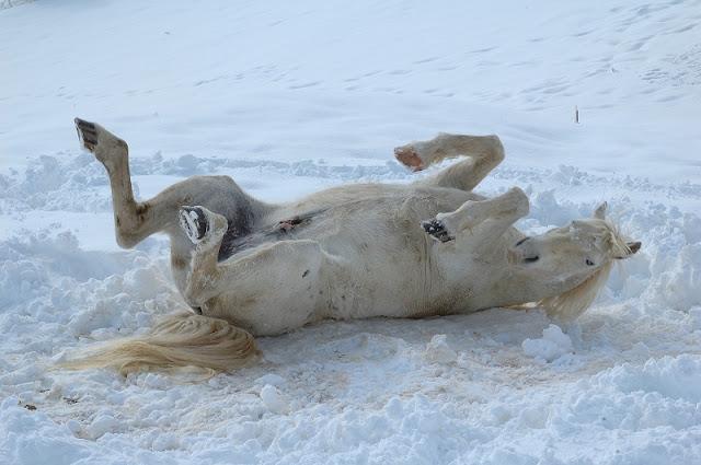 Cavallo neve pescasseroli