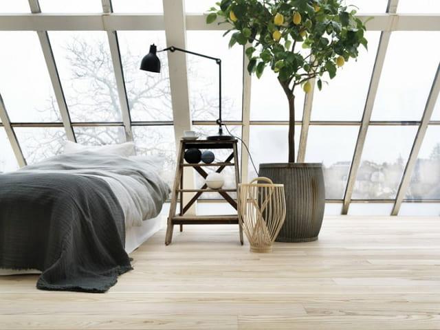 gambar tanaman hias ruang tidur