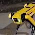 LA REALIDAD CADA VEZ MÁS CERCA DE LA CIENCIA FICCIÓN: Video de un perro robot patrullando las calles en CANADÁ se vuelve VIRAL