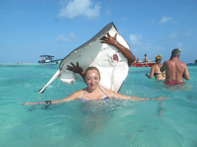 Tours para ver vida marina