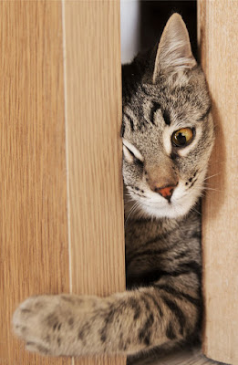 Behaviour issues due to a poor environment is a big issue for pet cats