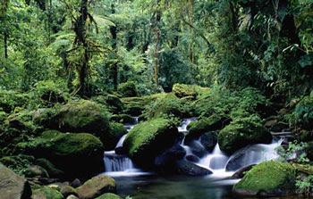 Gambar Hutan Terindah di Dunia 10