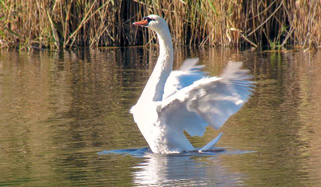 Дубоссарская осень Лебедь