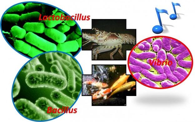 The Role Of Prebiotics And Probiotics In Aquaculture
