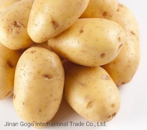 البطاطس من المأكولات اللذيذة والمفيدة ....لنتعرف عليها .