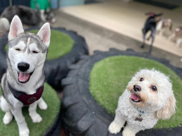 Bear with a husky at Dogs Inc