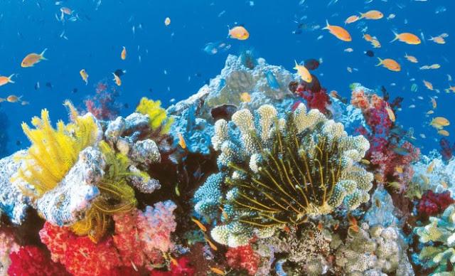 """Голяма част от коралите в """"Големия коралов риф"""" вече ги няма (ВИДЕО)"""