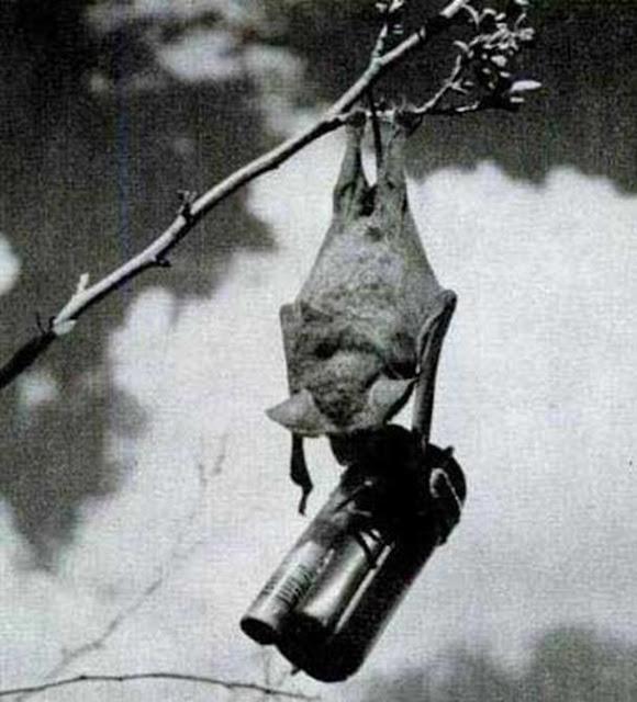 Morcego-bomba a bizarra arma norte-americana