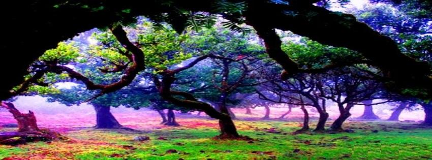 Beautiful Nature Facebook Timeline Images
