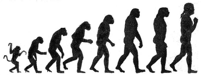 Summary of Darwinism