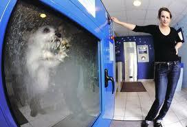 secando seu cão