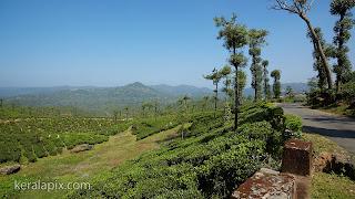 Tea estate on the way to Valparai at Malakkappara